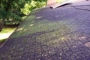roof-mold-moss-lichens